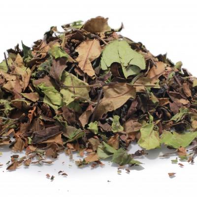 wild white tea2